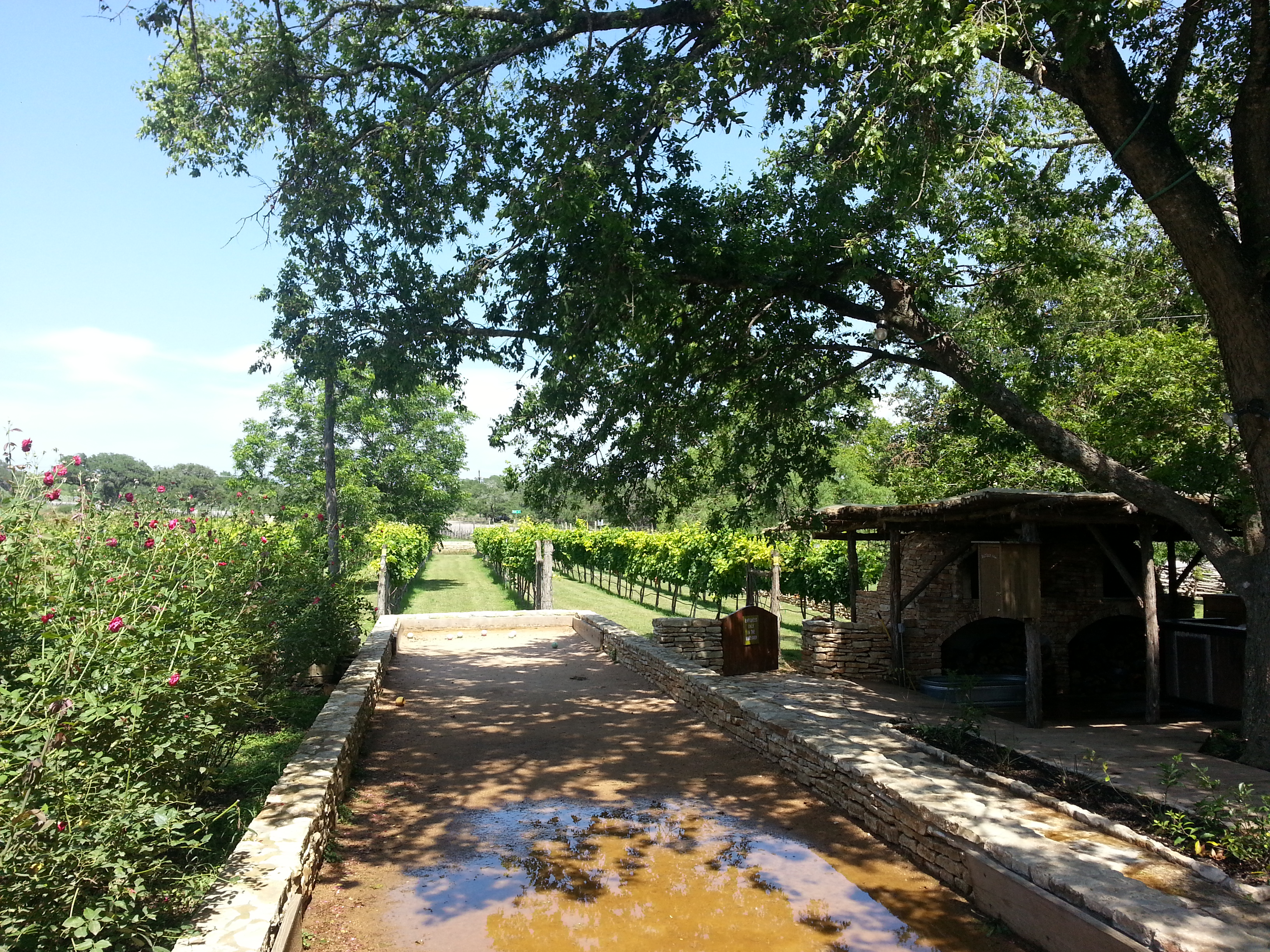 Vineyards at the salt lick