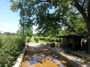 Some of the surrounding vineyards at Salt Lick Cellars and The Salt Lick restaurant