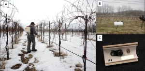 Figure 1. A) Don Smith sprays Amigo oil at Happy Valley vineyard. B&C) Temperature sensors installed at the vineyard.