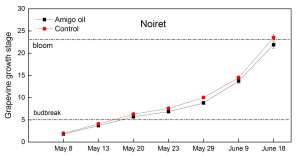 Figure 5. Growth stage of control and oil-treated Noiret vines.