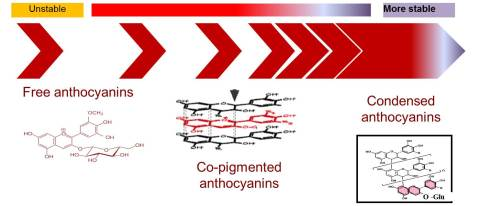 Figure 1: Several forms of anthocyanins available in wine.  (Photo credit: Enartis Vinquiry)