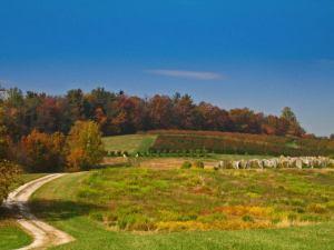 Penn State Biglerville vineyard site
