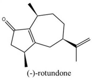 Nov 2014_Laura_Rotundone Chemical Figure