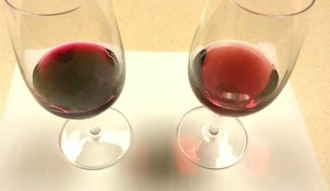 Glass on left contains Chambourcin with deep color intensity while the glass on the right is Chambourcin wine with medium color intensity.