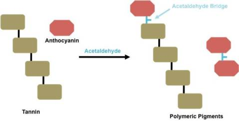 Figure 2. Polymeric pigment formation by reaction with acetaldehyde.