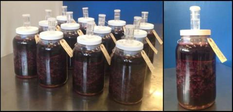 Figure 4. Experimental wines in microfermenters.