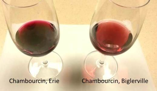 Chambourcin Wines in 2013 Vintage Year Showing Red Color Intensity Differences Between 2 Vineyard Sites in PA.
