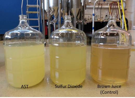Pre-Fermentation Juice Treatments in Vidal Blanc. All treatments treated with pectinase and 24-hour settling time in cold storage. Image shown after racking.
