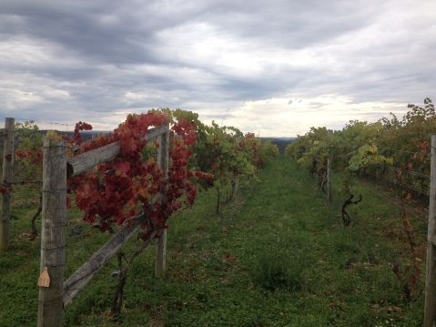 Skies have been cloudy over Pennsylvania vineyards.