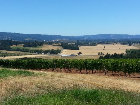 View of Willamette Valley from Penner-Ash Vineyards