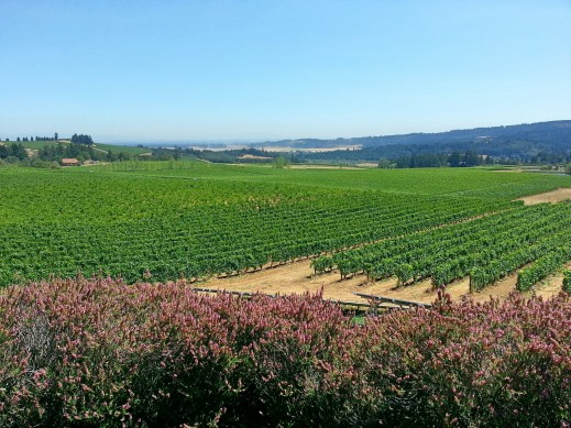 View of the Willamette Valley from Bethel Heights Vineyard.