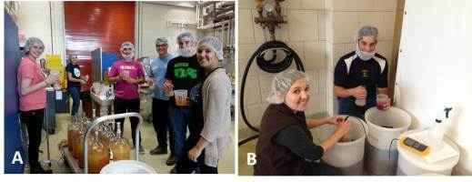 Figure 5: Students also learn how to properly inoculate wines for primary fermentation.  A: Marielle, Stephanie, Joe, Garrett, Gary and Blair inoculate Riesling wines; Photo by: Denise M. Gardner; B: Denise and Gary inoculate Cabernet Sauvignon musts; Photo by: Marlena Sheridan.