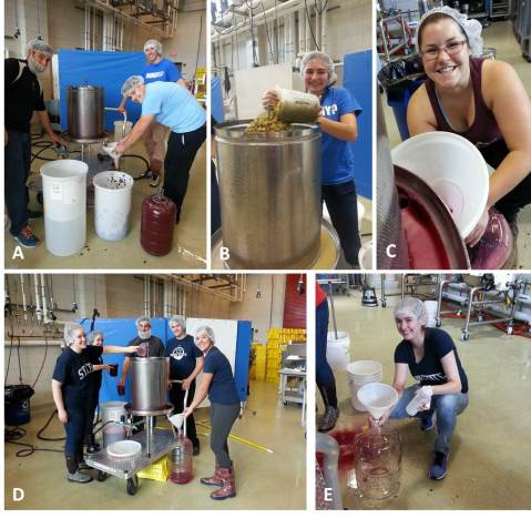 Figure 7: Pressing [white/rosé] juice or finished [red] wine is always an experience. A: Gary, George, and Garrett press rosé to prepare for overnight settling, B: Stephanie loads the press with crushed white berries, C: Allie fills a carboy of finished red wine, D: Laura, Marlena, Gary, Garrett, and Blair preparing for red wine pressing, and E: Marielle sits in the splash zone for red wine pressing.  Photos by: Denise M. Gardner