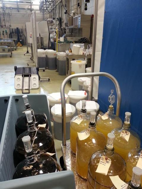 Figure 13: Another full year of research winemaking at Penn State – vintage 2015.  Photo by: Denise M. Gardner