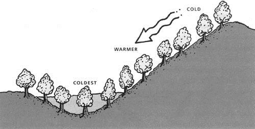 Figure 2. Cold air drains downhill and settles in low spots, where frost damage is most likely