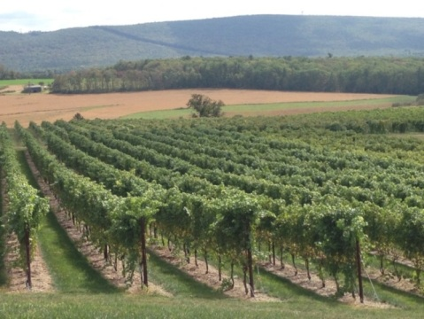 Why Should We Care About Under Trellis Cover Crops Wine