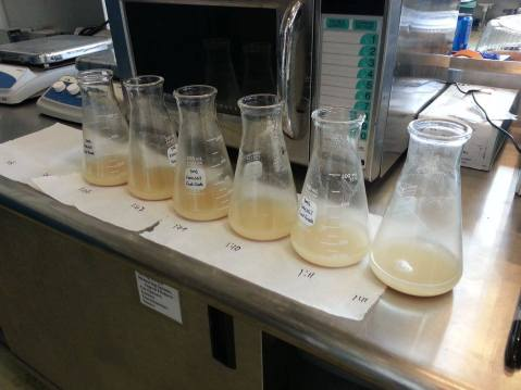 Yeast hydration nutrients are an important component of re-hydrating freeze dried yeast. Winemakers should make sure to avoid DAP additions at this stage. Inoculation photo by Denise M. Gardner