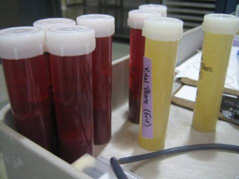 Running basic chemical analysis on your wines and updating records is an essential component of making quality wine. Photo by: Denise M. Gardner