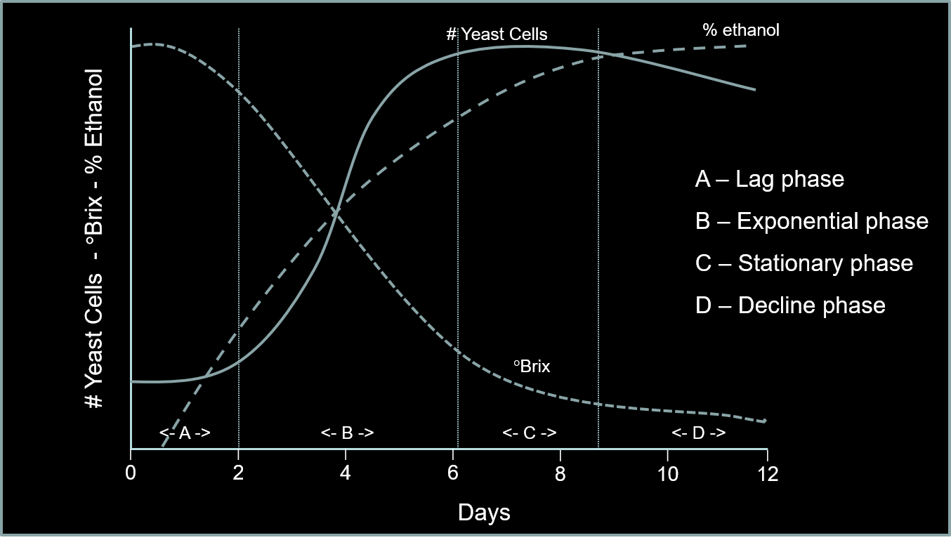 yeast growth curve